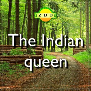 ZDD3 - The Indian queen